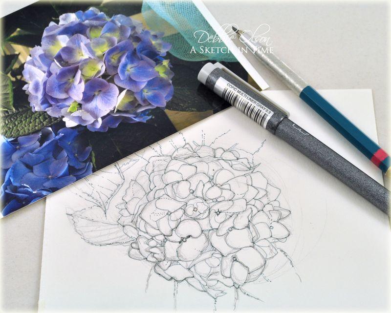 Hyac_Pencil_Ink_DOlson2