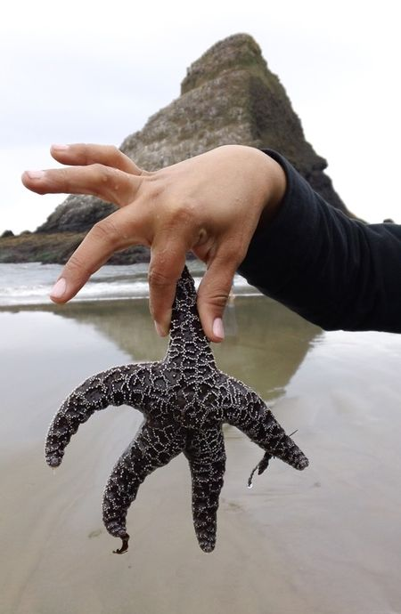JennStarfish