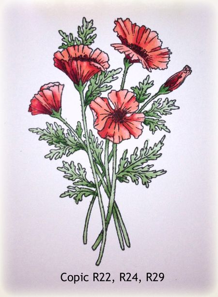 JRS_Poppies2_DO