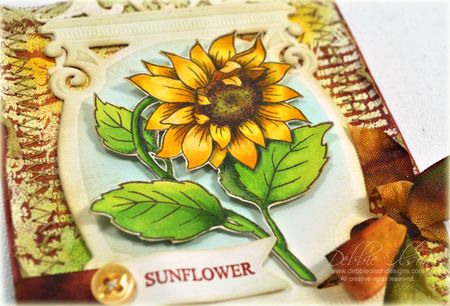 Sunflower_JRP1b_Debbie-Olson