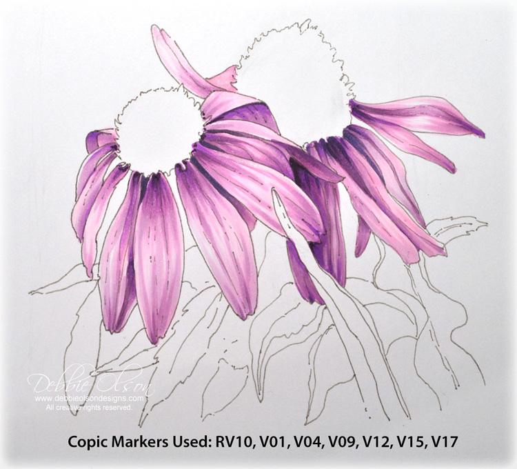 LC_Echinacea1d_Deb-Olson