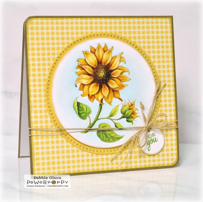 PP_Sunflower1a_Deb-Olson