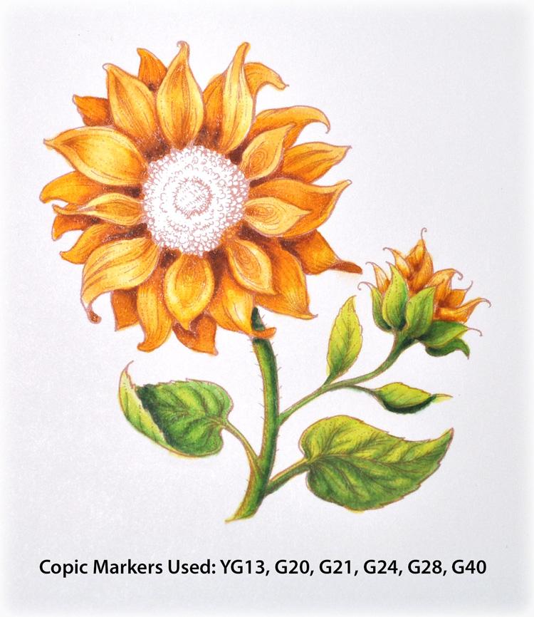 PP_Sunflower1c_Deb-Olson