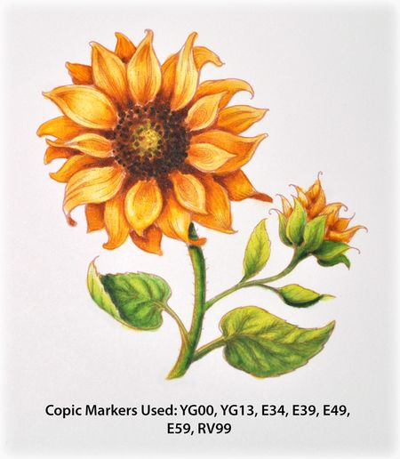PP_Sunflower1d_Deb-Olson