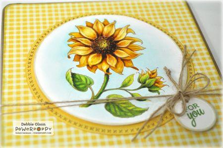 PP_Sunflower1f_Deb-Olson