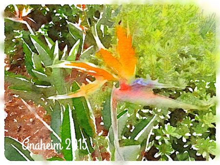 Bird-of-Paradise_WATERLOGUE-Deb-Olson