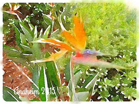 Bird-of-Paradise_WATERLOGUE-Deb-Olson