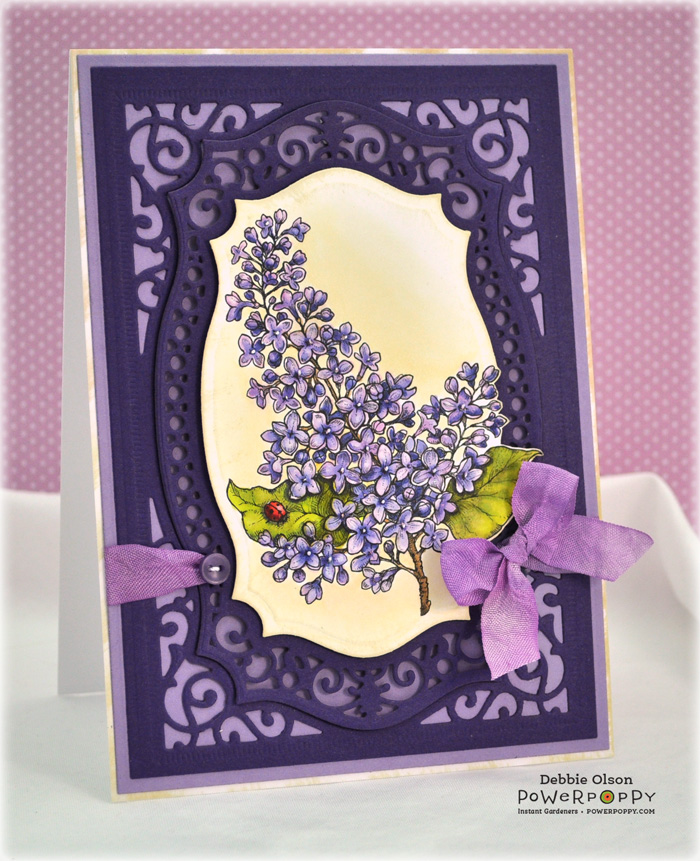PP_Lilacs_Cp_Spb1a_Deb-Olson