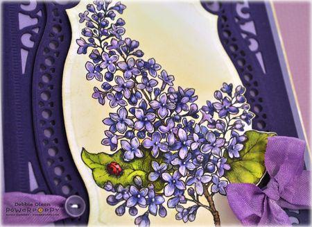 PP_Lilacs_Cp_Spb1b_Deb-Olson
