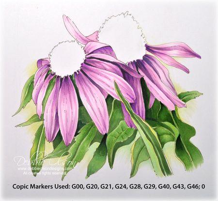 LC_Echinacea1e_Deb-Olson