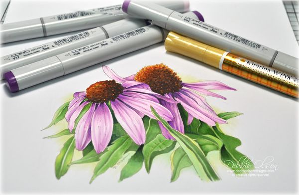 Line Drawing Coneflower : Purple coneflower sketch and marker rendering sketches