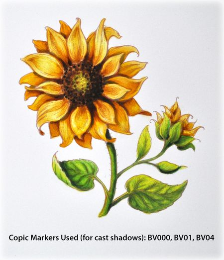 PP_Sunflower1e_Deb-Olson
