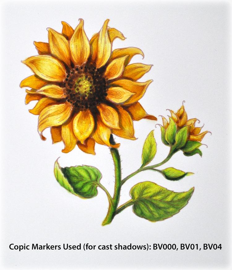 PP_Sunflower1e_Deb-Olson