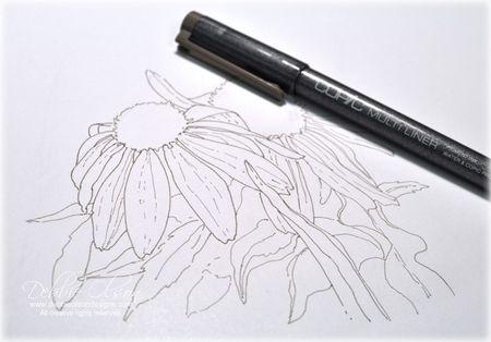 LC_Echinacea1c_Deb-Olson