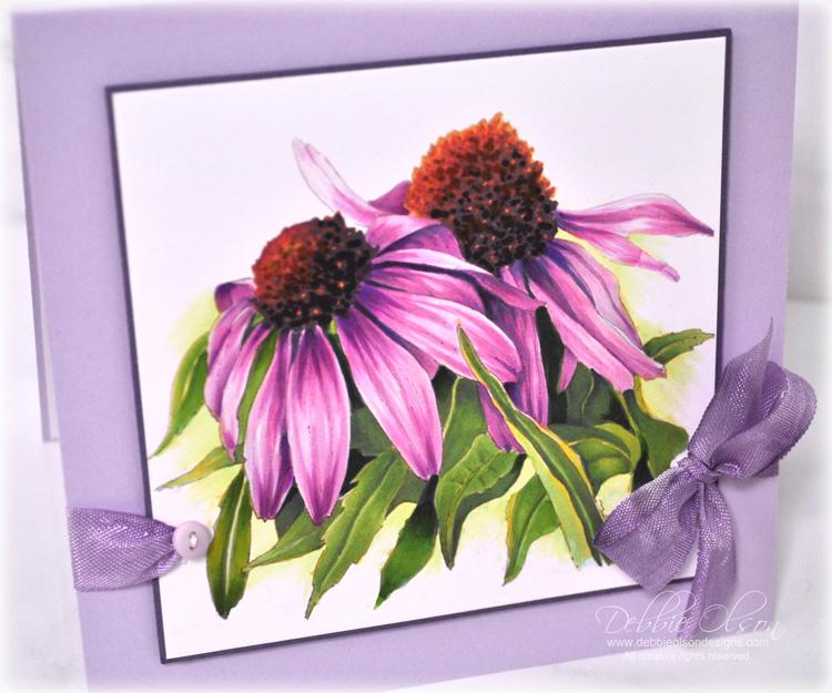 LC_Echinacea1h_Deb-Olson