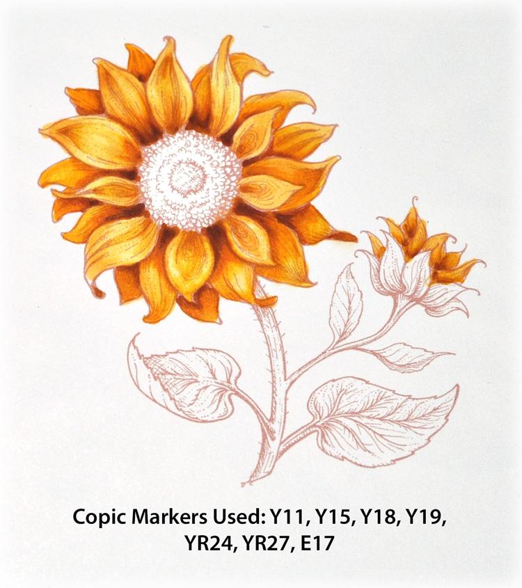 PP_Sunflower1b_Deb-Olson